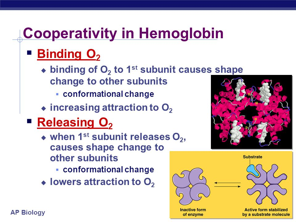 Cooperativity in Hemoglobin