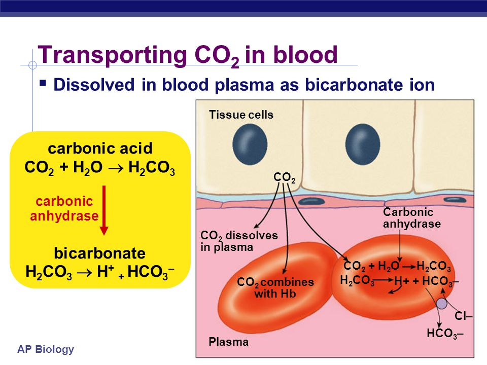 Transporting CO2 in blood