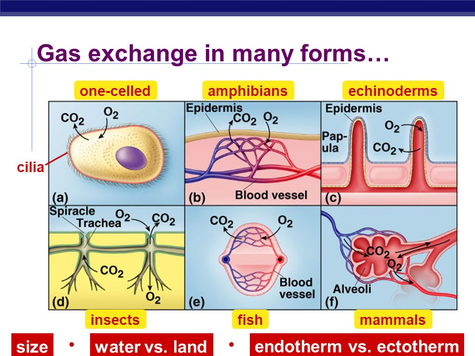 Gas exchange in many forms…