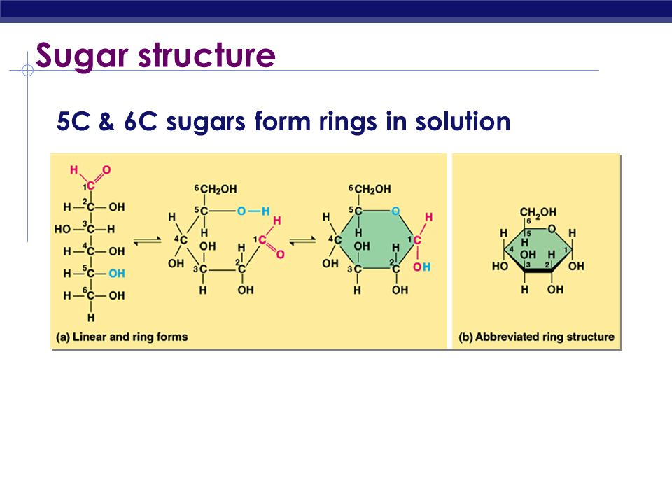 Sugar structure 5C & 6C sugars form rings in solution