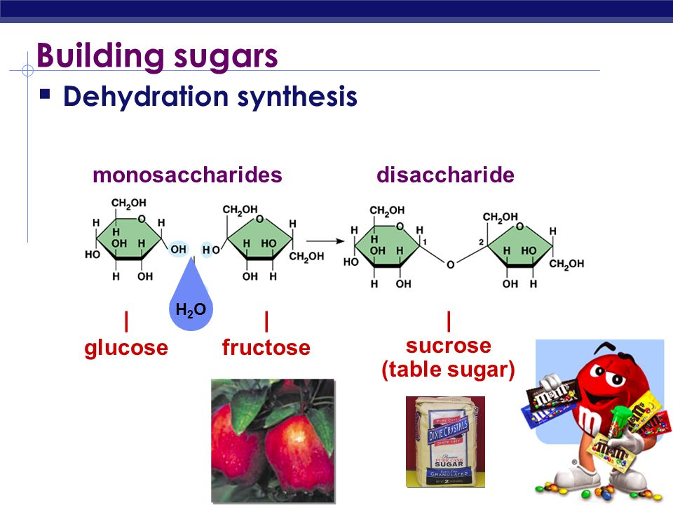 Building sugars Dehydration synthesis monosaccharides disaccharide |