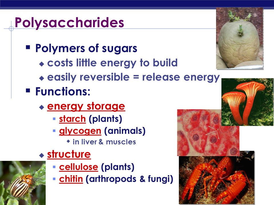 Polysaccharides Polymers of sugars Functions: