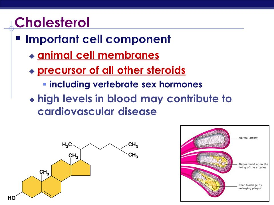 Cholesterol Important cell component animal cell membranes