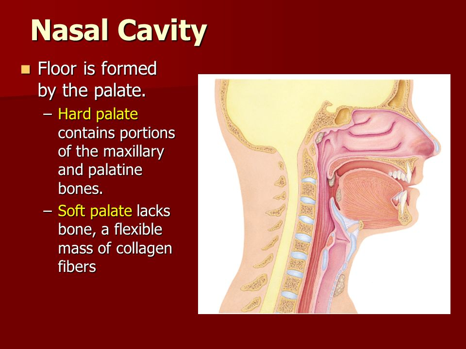 Nasal Cavity Floor is formed by the palate.