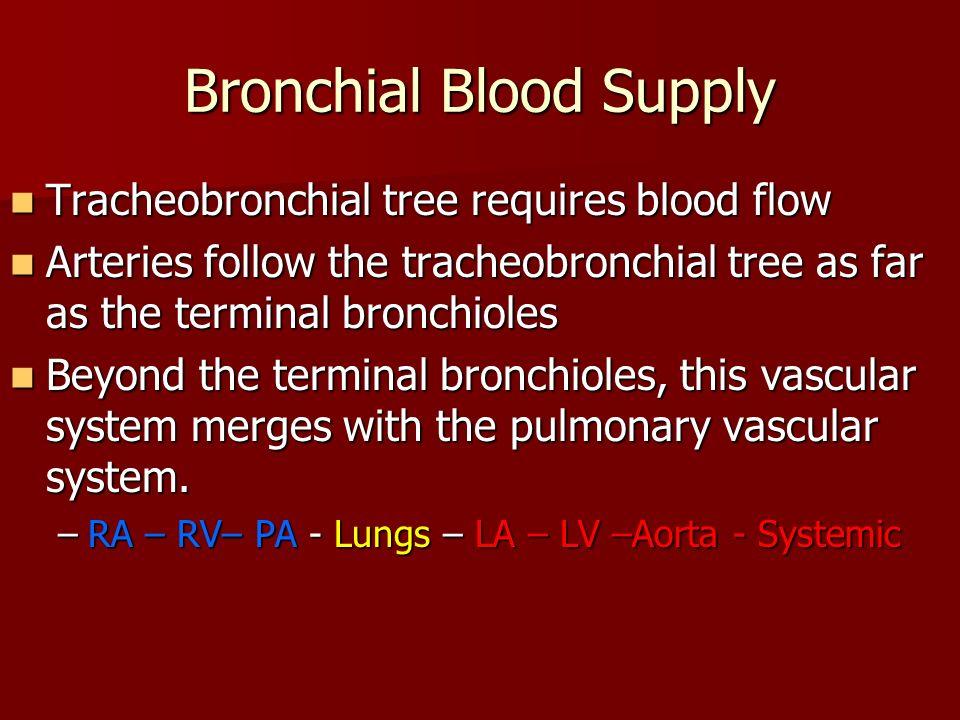 Bronchial Blood Supply