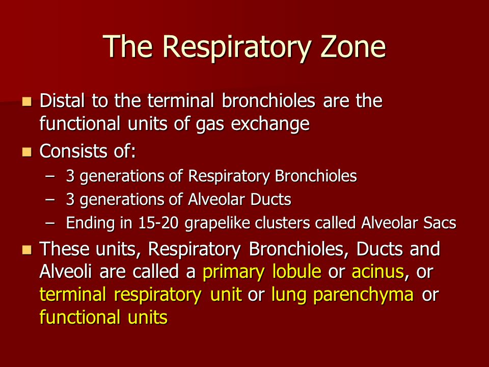 The Respiratory Zone Distal to the terminal bronchioles are the functional units of gas exchange. Consists of:
