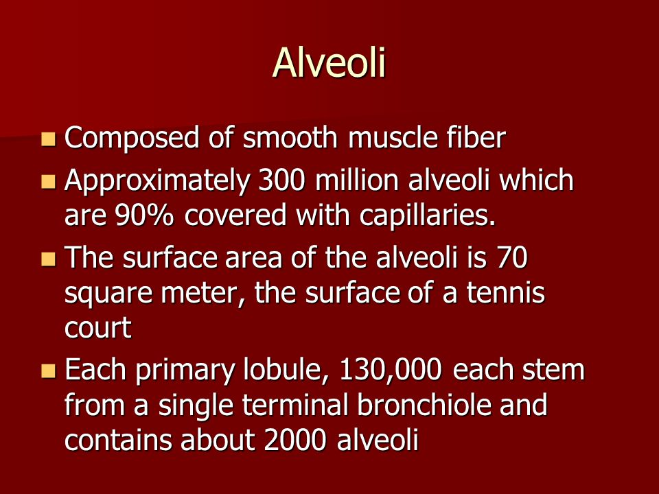 Alveoli Composed of smooth muscle fiber