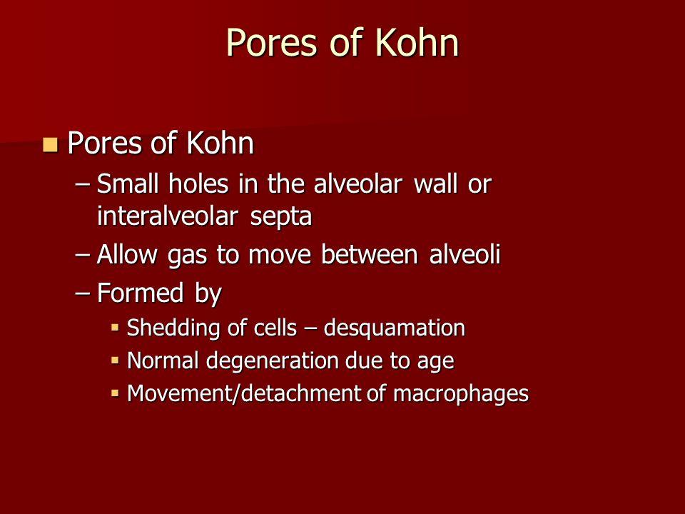 Pores of Kohn Pores of Kohn