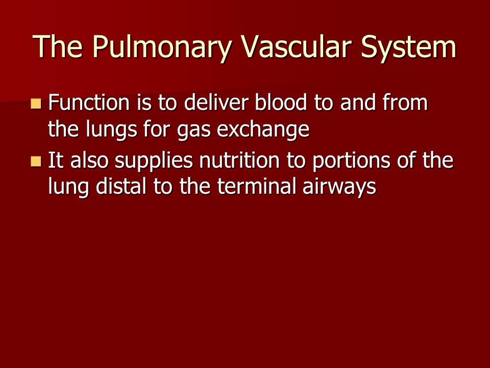 The Pulmonary Vascular System