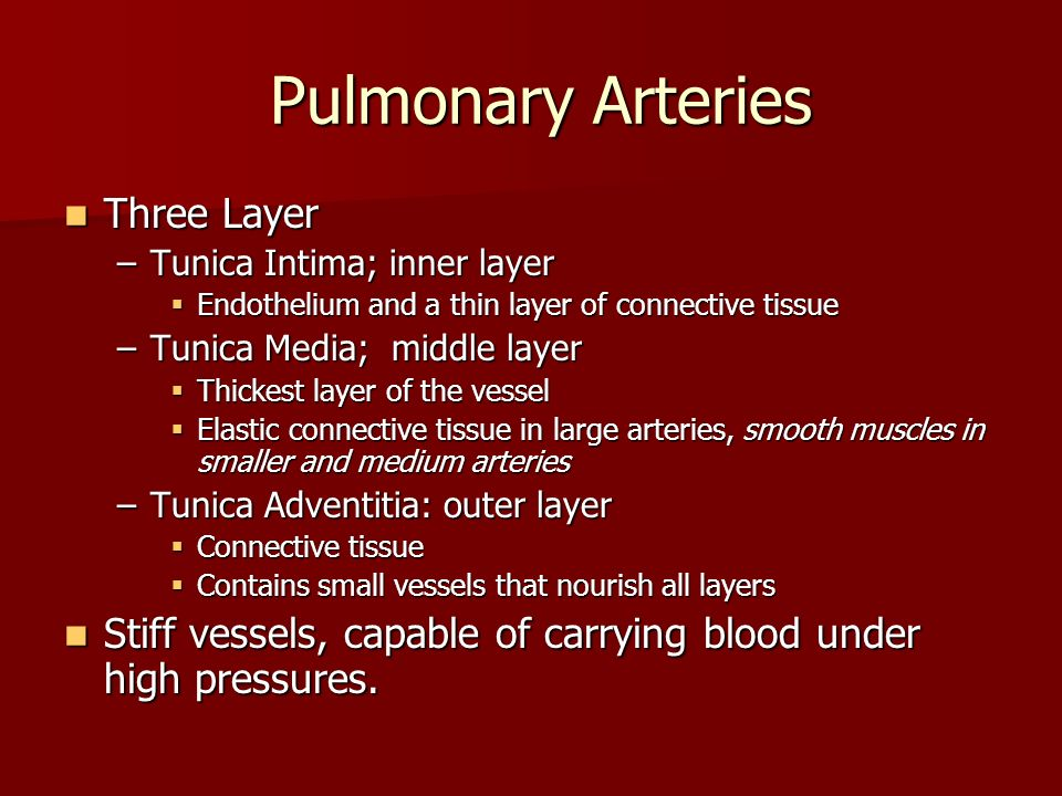 Pulmonary Arteries Three Layer
