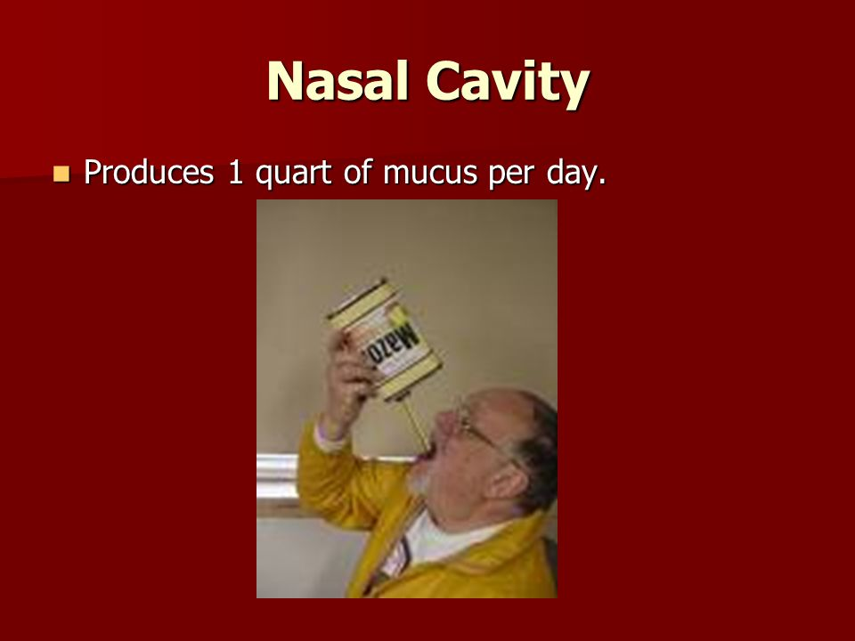 Nasal Cavity Produces 1 quart of mucus per day.