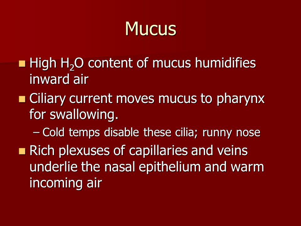 Mucus High H2O content of mucus humidifies inward air