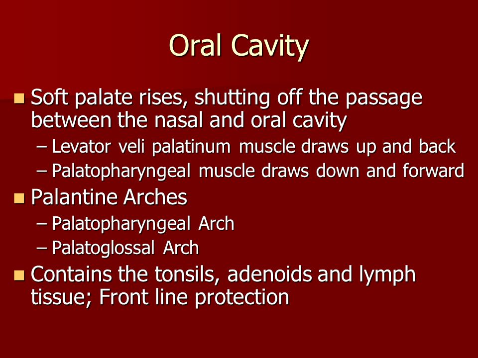 Oral Cavity Soft palate rises, shutting off the passage between the nasal and oral cavity. Levator veli palatinum muscle draws up and back.
