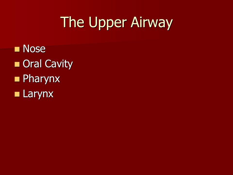 The Upper Airway Nose Oral Cavity Pharynx Larynx