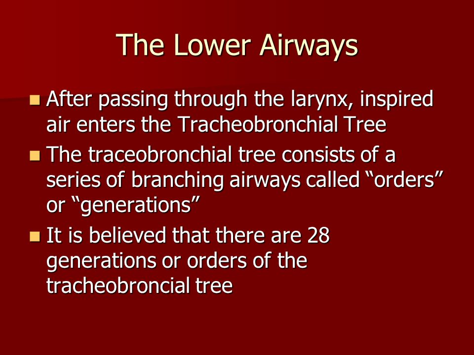 The Lower Airways After passing through the larynx, inspired air enters the Tracheobronchial Tree.