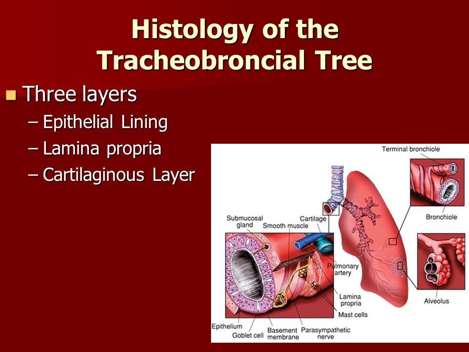Histology of the Tracheobroncial Tree