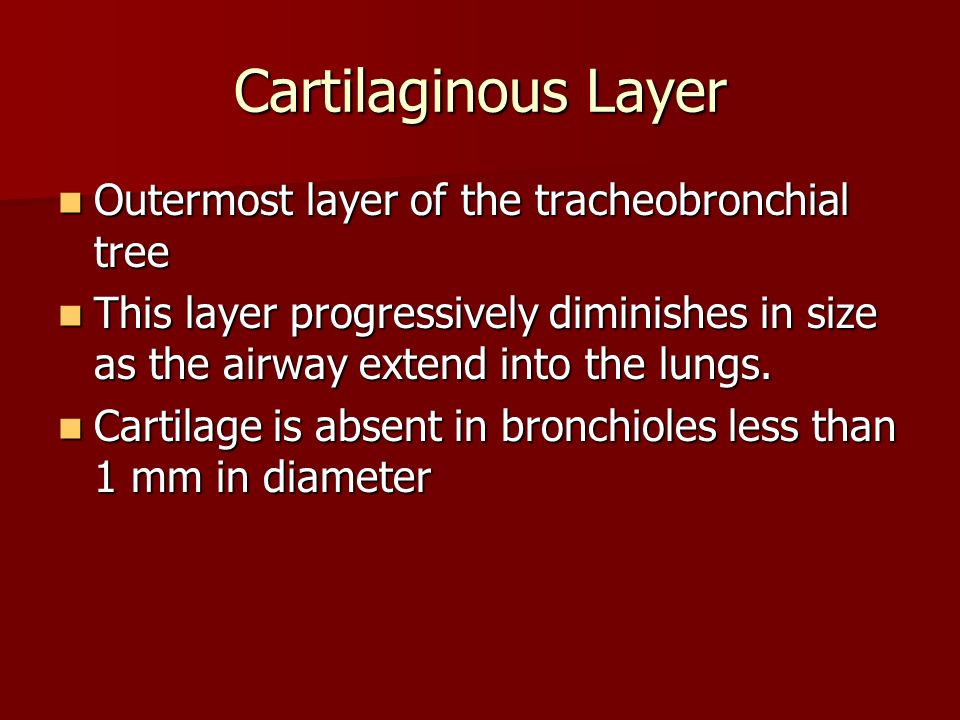 Cartilaginous Layer Outermost layer of the tracheobronchial tree