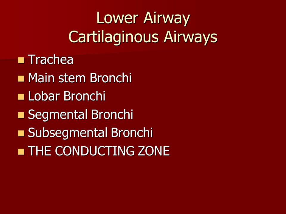 Lower Airway Cartilaginous Airways