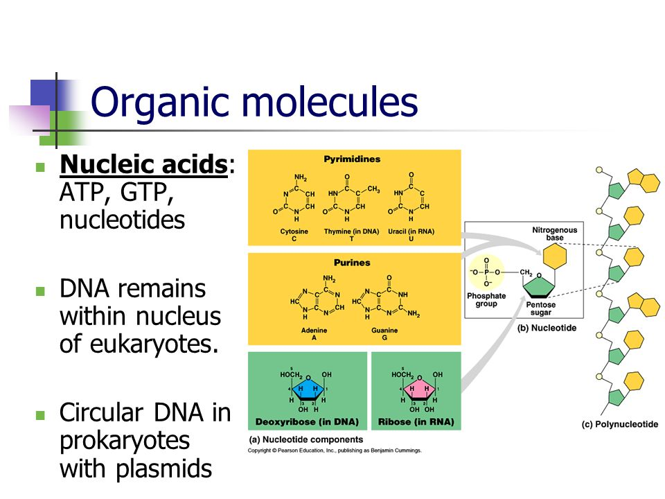 Organic molecules Nucleic acids: ATP, GTP, nucleotides