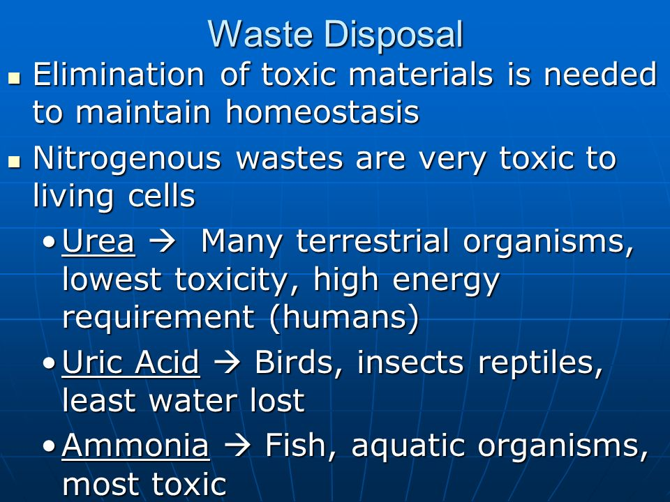 Waste DisposalElimination of toxic materials is needed to maintain homeostasis. Nitrogenous wastes are very toxic to living cells.