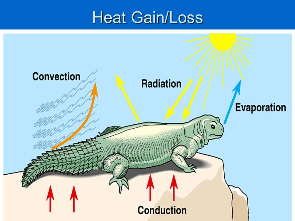 Heat Gain/Loss