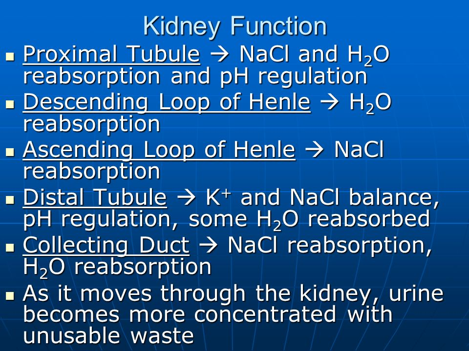 Kidney Function Proximal Tubule  NaCl and H2O reabsorption and pH regulation. Descending Loop of Henle  H2O reabsorption.