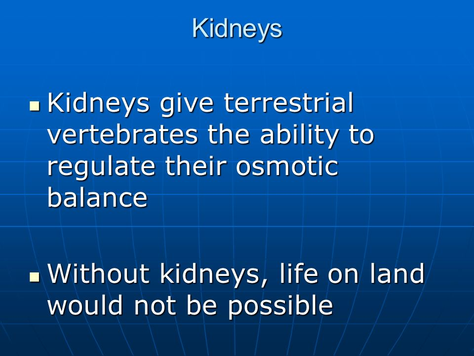 Kidneys Kidneys give terrestrial vertebrates the ability to regulate their osmotic balance.