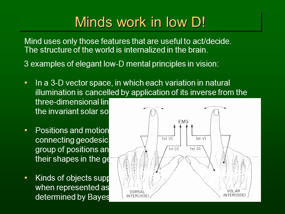 Minds work in low D! Mind uses only those features that are useful to act/decide. The structure of the world is internalized in the brain.