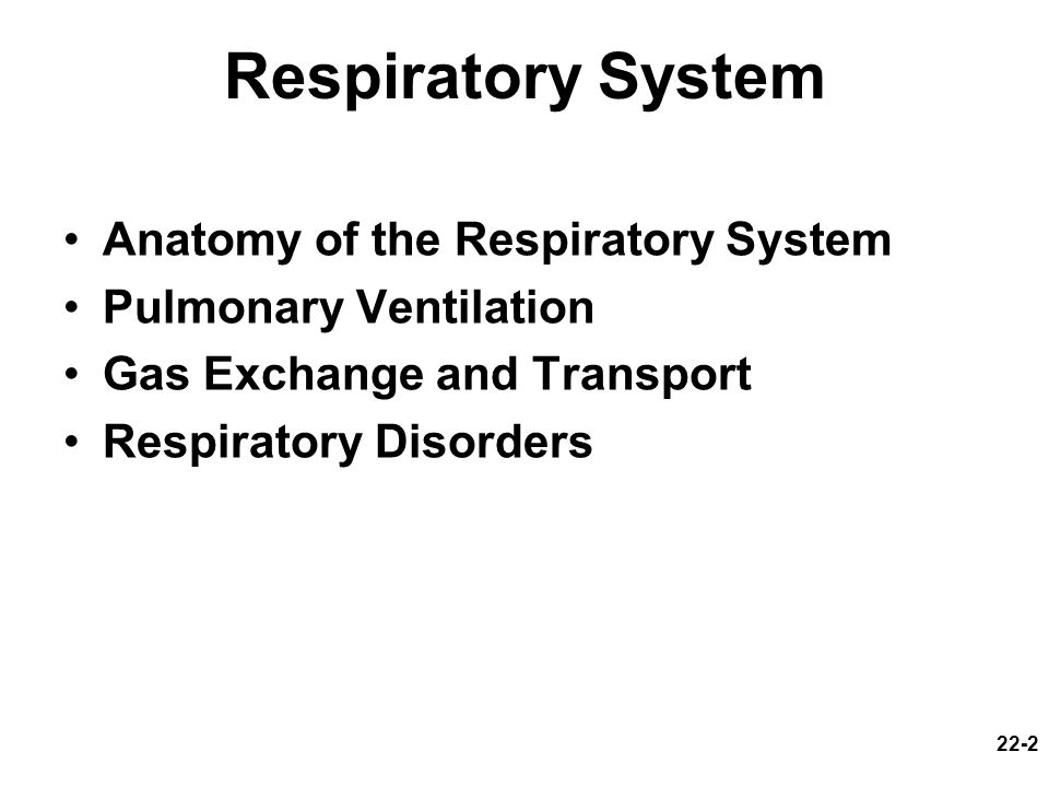 Respiratory System Anatomy of the Respiratory System