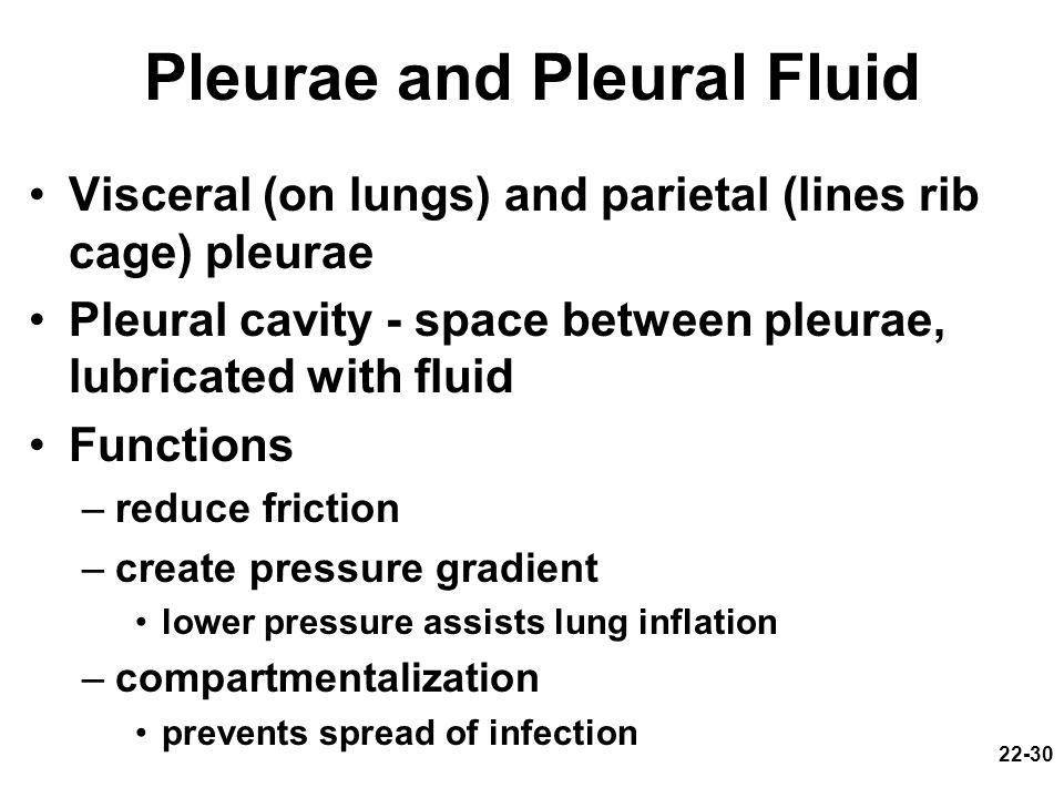 Pleurae and Pleural Fluid