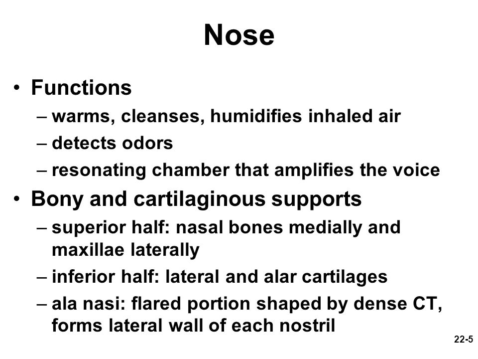 Nose Functions Bony and cartilaginous supports