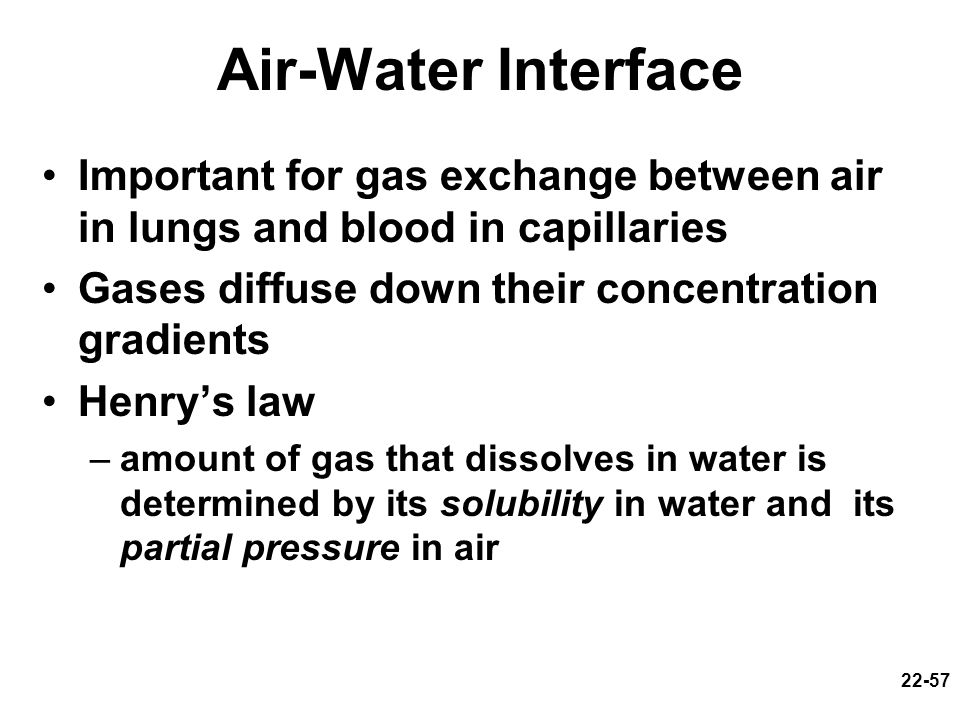 Air-Water Interface Important for gas exchange between air in lungs and blood in capillaries. Gases diffuse down their concentration gradients.