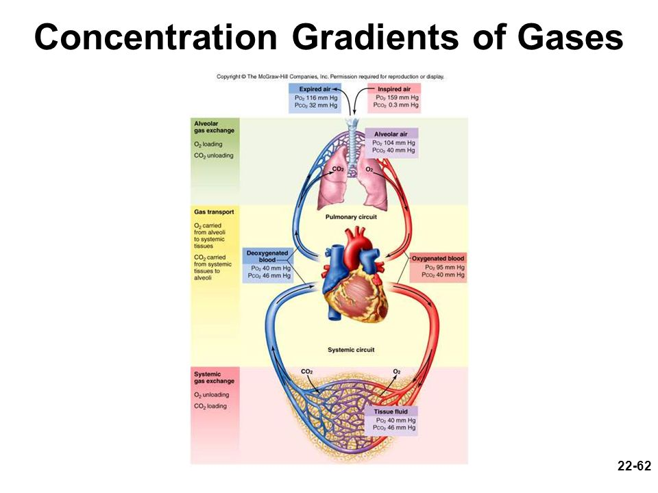 Concentration Gradients of Gases