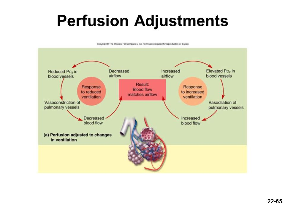 Perfusion Adjustments