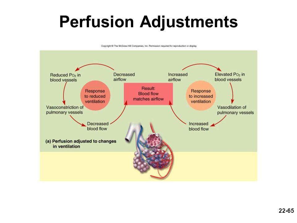Perfusion Adjustments