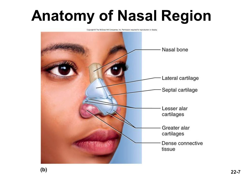 Anatomy of Nasal Region