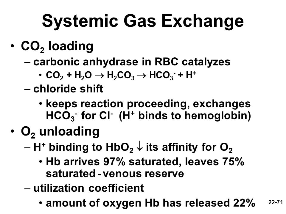Systemic Gas Exchange CO2 loading O2 unloading