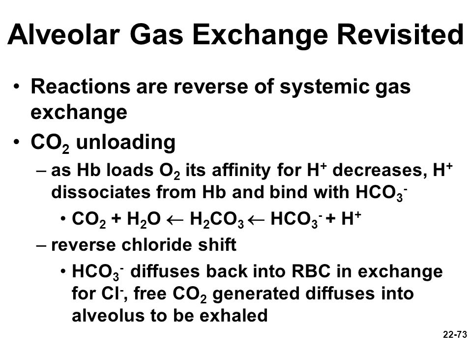 Alveolar Gas Exchange Revisited