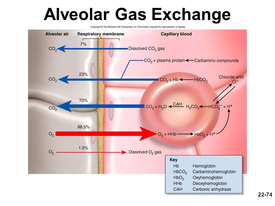 Alveolar Gas Exchange