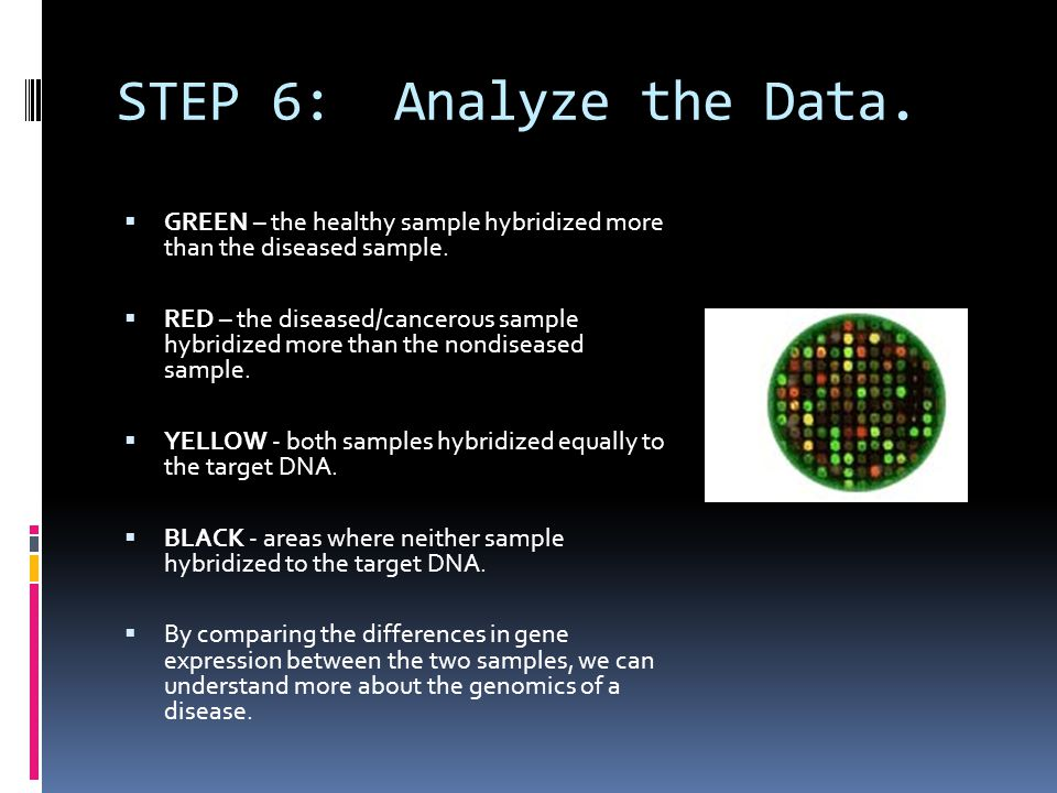 STEP 6: Analyze the Data. GREEN – the healthy sample hybridized more than the diseased sample.