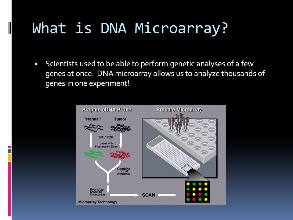 What is DNA Microarray