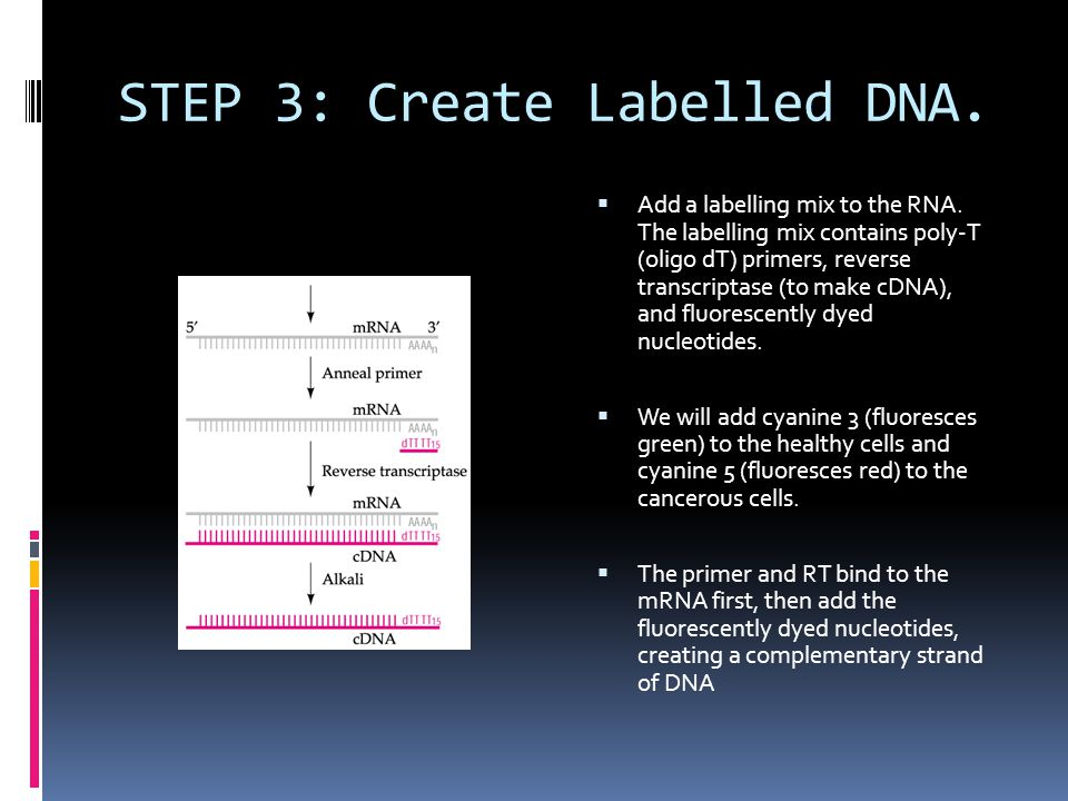 STEP 3: Create Labelled DNA.