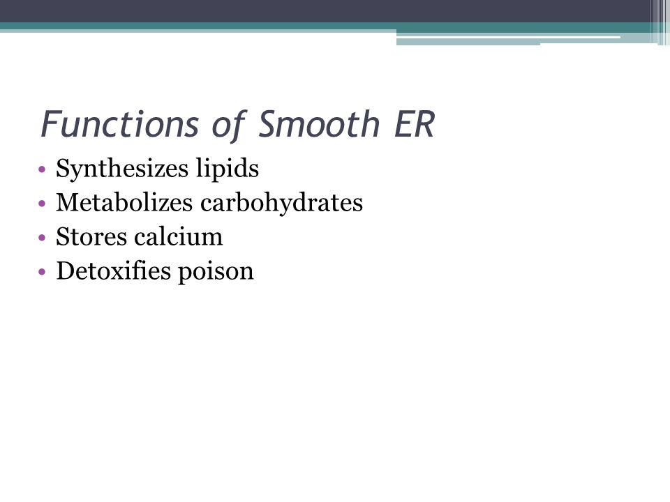 Functions of Smooth ER Synthesizes lipids Metabolizes carbohydrates