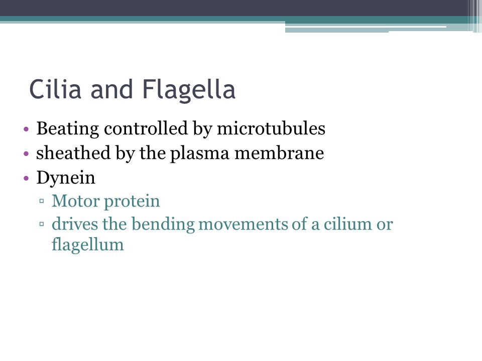 Cilia and Flagella Beating controlled by microtubules