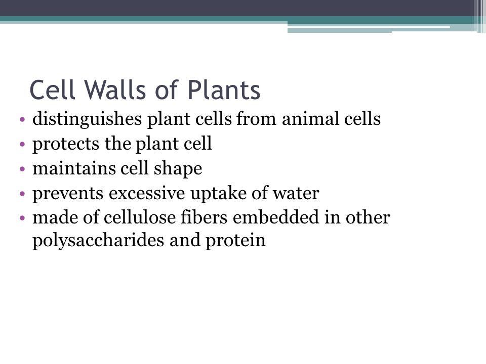 Cell Walls of Plants distinguishes plant cells from animal cells