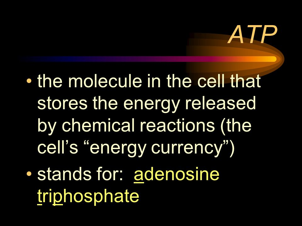 ATP the molecule in the cell that stores the energy released by chemical reactions (the cell's energy currency )
