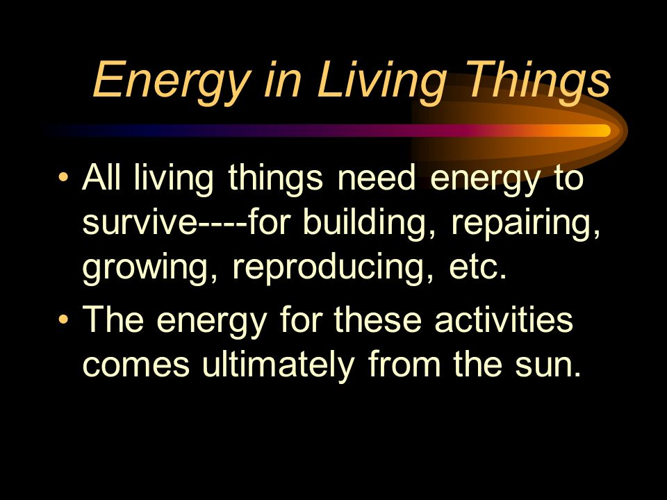 Energy in Living Things