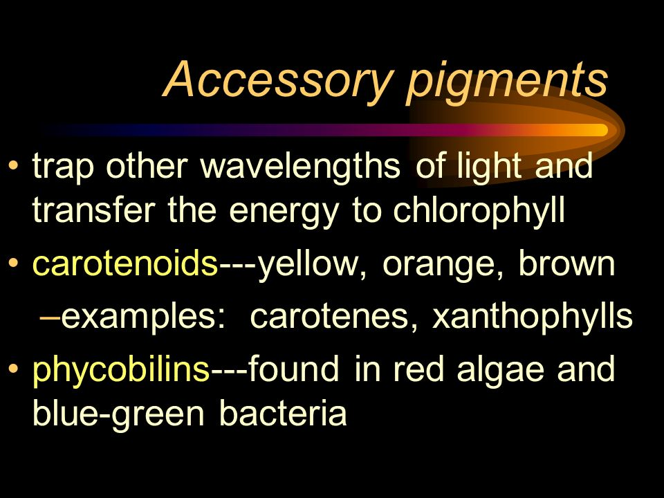 Accessory pigmentstrap other wavelengths of light and transfer the energy to chlorophyll. carotenoids---yellow, orange, brown.