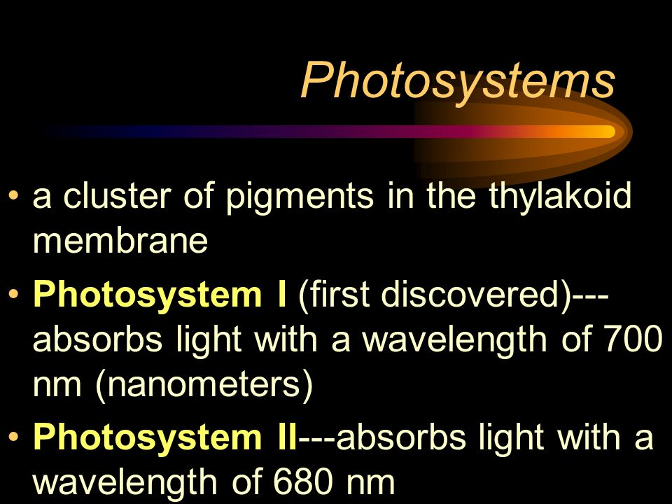 Photosystems a cluster of pigments in the thylakoid membrane