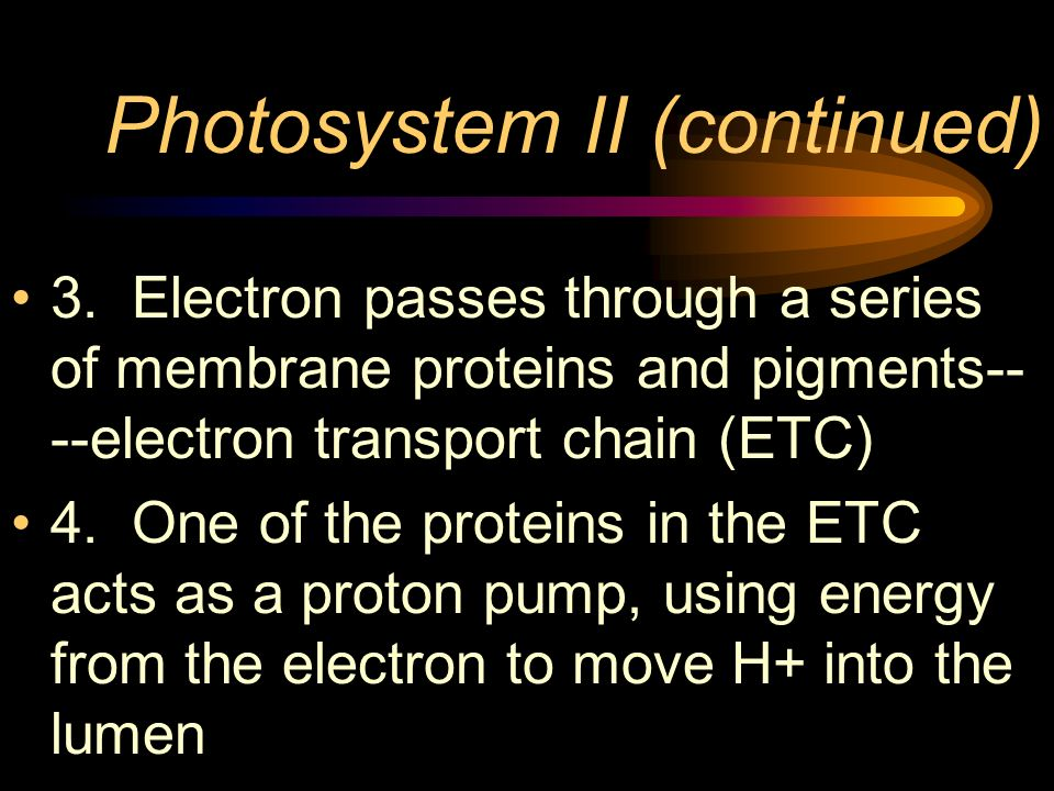 Photosystem II (continued)